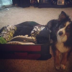 sadie suitcase